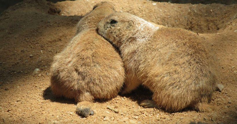 Letos se pražská zoo zaměří na obohacování života zvířat