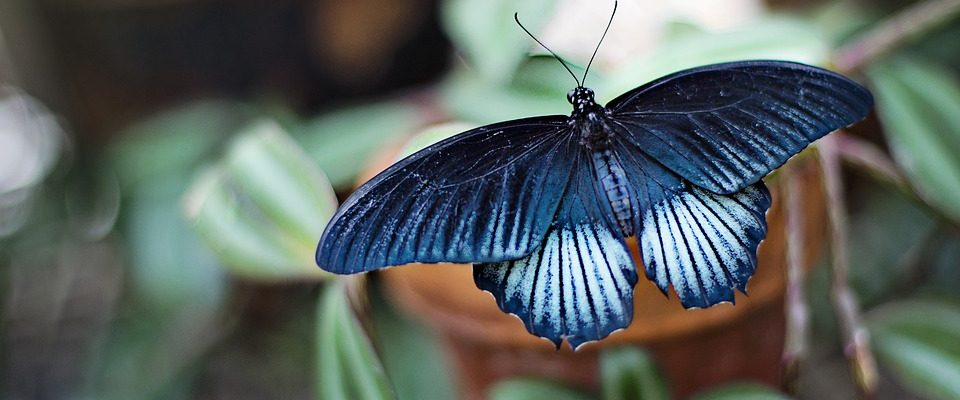 Za motýly do pražské Fata morgana