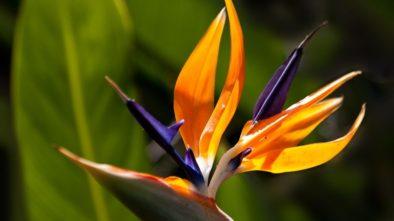 Za teplem i za krásou do tropického skleníku Fata Morgana