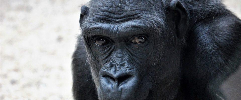 Pražská zoo funguje v covidovém režimu