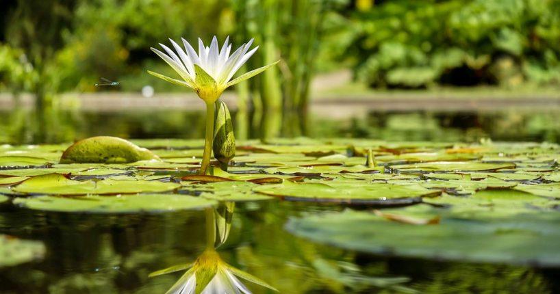 Letná se bude pyšnit zbrusu novým rybníkem